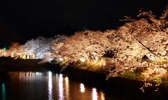 夜桜 松本城周り2