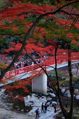 香嵐渓の紅葉と川