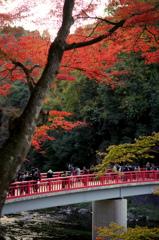 香嵐渓の赤い橋