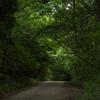 朝の散歩コース8