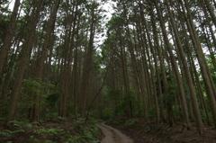 朝の散歩コース4