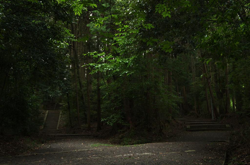 朝の散歩コース1