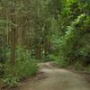 朝の散歩コース3
