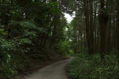 朝の散歩コース7