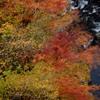橋の上から紅葉