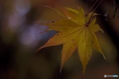 秋雨とともに