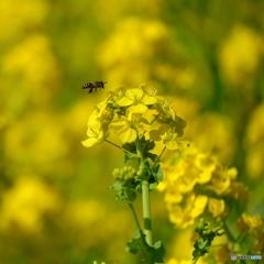 羽が消えた蜂