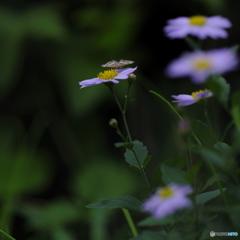 花と・・・②