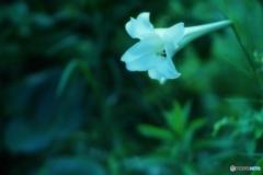 白い夏 3