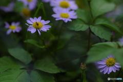 花と・・①