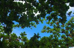 木陰から見上げる夏の空