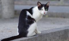猫背だけど、なにか(^O^)
