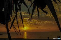 秋の夕日、タコの木の間から
