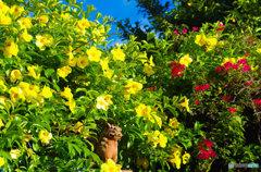 花に囲まれて嬉シーサー(*^^*)