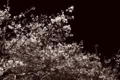 春の闇に触手を伸ばす