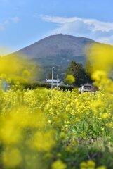 室根山と菜の花