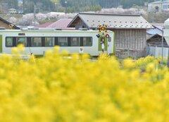 菜の花列車_走る