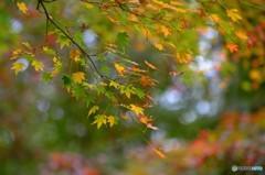 色づく秋 5完