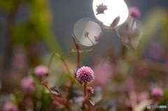 岸辺の小花