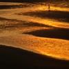 黄金色の砂紋