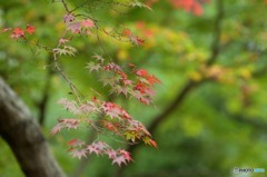 秋の旧細川刑部邸 4