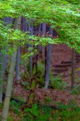 続・多彩な季節ですね(熊本市) 2
