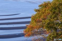 晩秋の御輿来海岸 1
