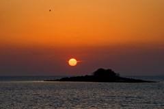 希少種スナメリと夕陽 4