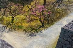春来る(熊本城) 3