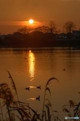 江津湖の夕暮れ
