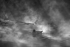 朝霧の浮島周辺水辺公園 5完