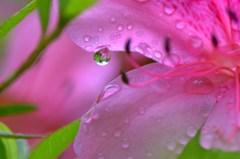 花ショウブの季節 4完