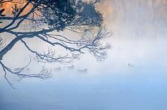 朝霧の浮島周辺水辺公園 4