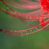 花は秋雨に濡れて・・・・ 4完