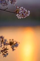 夕陽の光跡