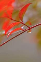 古寺に冬の雨・・・ 3