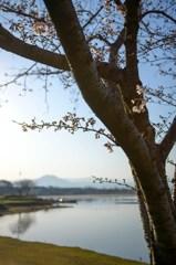 柳や桜に旬の趣き 4完