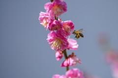 春来る(熊本城) 2