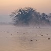 朝霧の江津湖 2