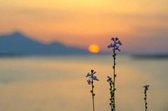サギと夕陽 4完