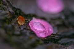 春雨か・・・・ 2