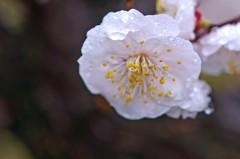 春雨か・・・・ 3完