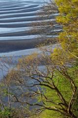 春の干潟模様 1
