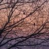 朝霧の江津湖 1