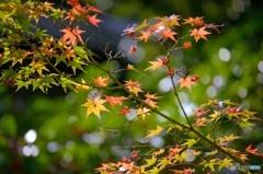 秋の旧細川刑部邸 2