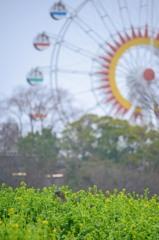 雨の動植物園 2