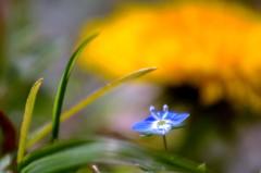 季節は華やかな春へ 3(天草市の西海岸)