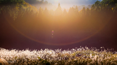 ☆森の記憶