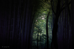 竹林の隙間から その1