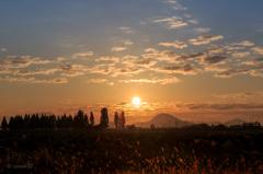 日の出で輝くねこじゃらし